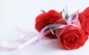 rose flowers pictures free